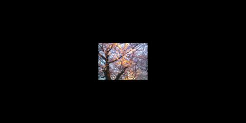 お花見 天神中央公園